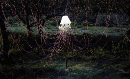 Caleb-Charland-Apple-Trees-and-LEDs-2011