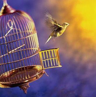 caded bird flys