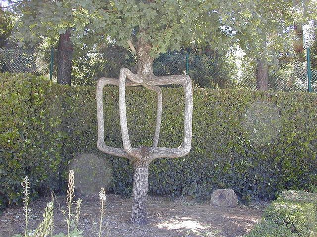 shaped-tree-006
