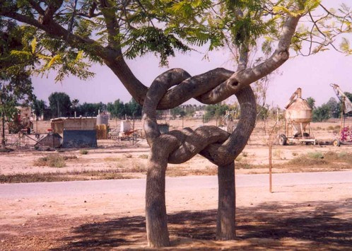 shaped-tree-010