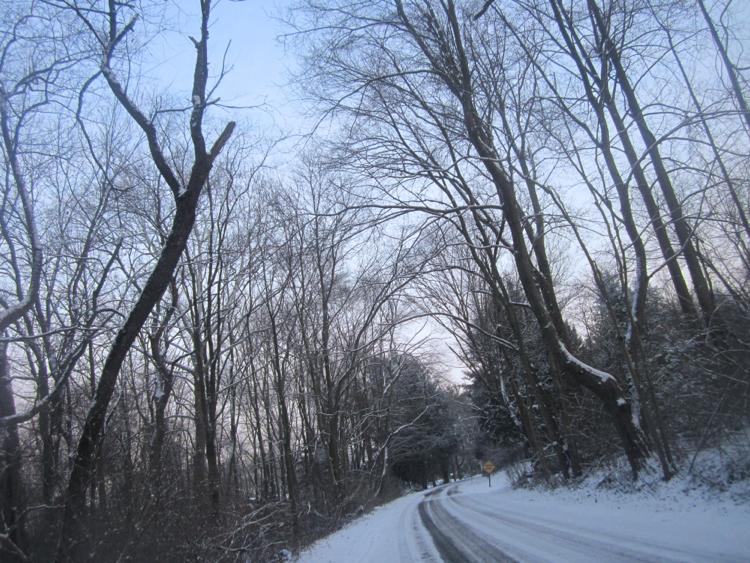trees bow